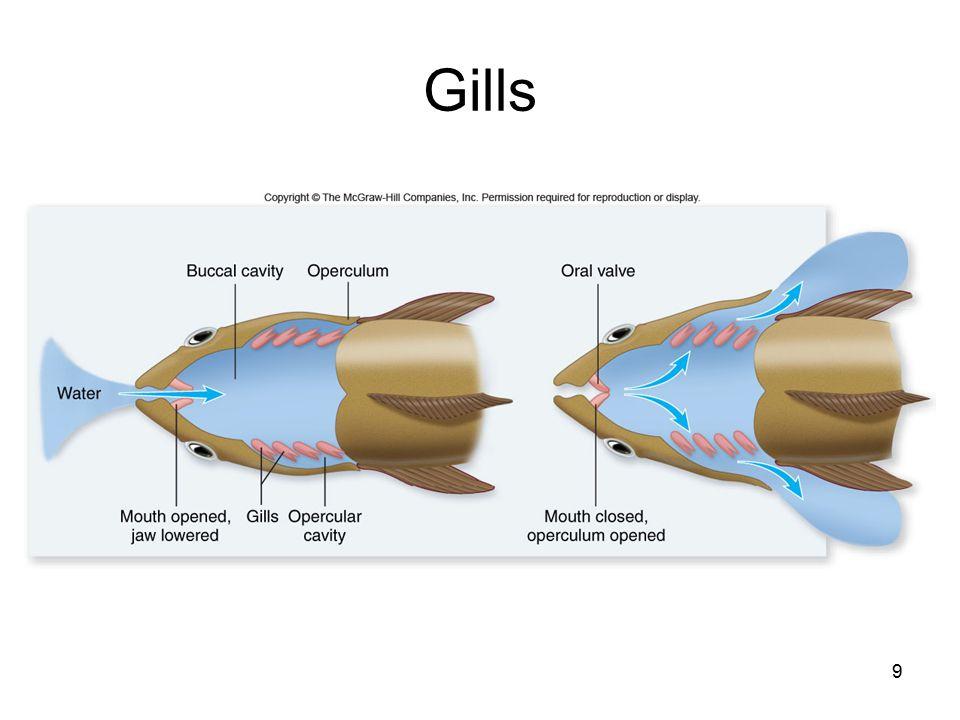 9 Gills