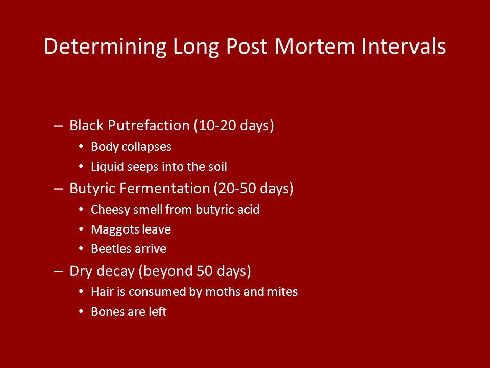 Determining Long Post Mortem Intervals – Black Putrefaction (10-20 days) Body collapses Liquid seeps into the soil – Butyric Fermentation (20-50 days)