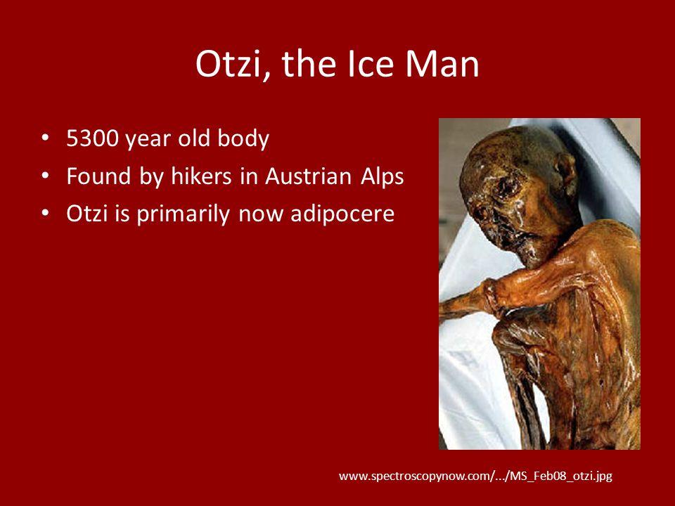 Otzi, the Ice Man 5300 year old body Found by hikers in Austrian Alps Otzi is primarily now adipocere www.spectroscopynow.com/.../MS_Feb08_otzi.jpg