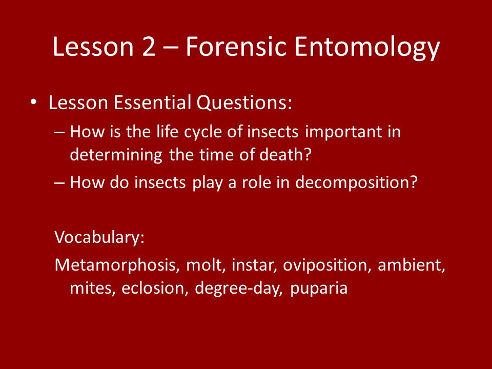 Worksheet Forensic Entomology Worksheet unit 8 decomposition human remains mrs teates forensic lesson 2 entomology essential questions how is the life cycle of