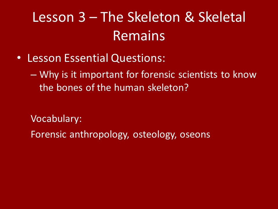 Lesson 3 – The Skeleton & Skeletal Remains Lesson Essential Questions: – Why is it important for forensic scientists to know the bones of the human sk