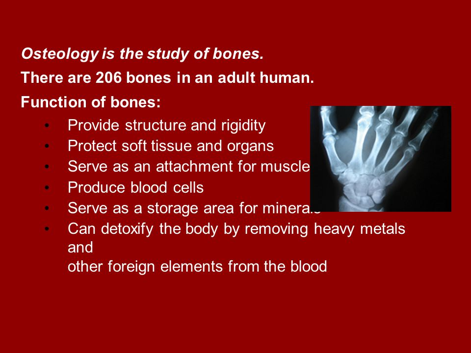 Osteology Osteology is the study of bones. There are 206 bones in an adult human. Function of bones: Provide structure and rigidity Protect soft tissu