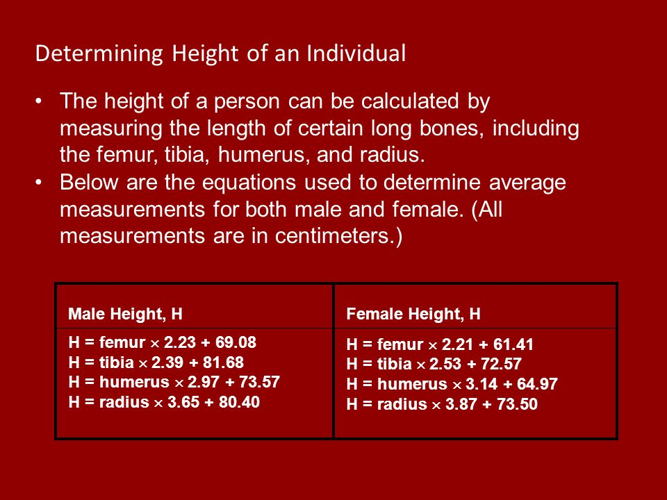 Estimation of Height The height of a person can be calculated by measuring the length of certain long bones, including the femur, tibia, humerus, and