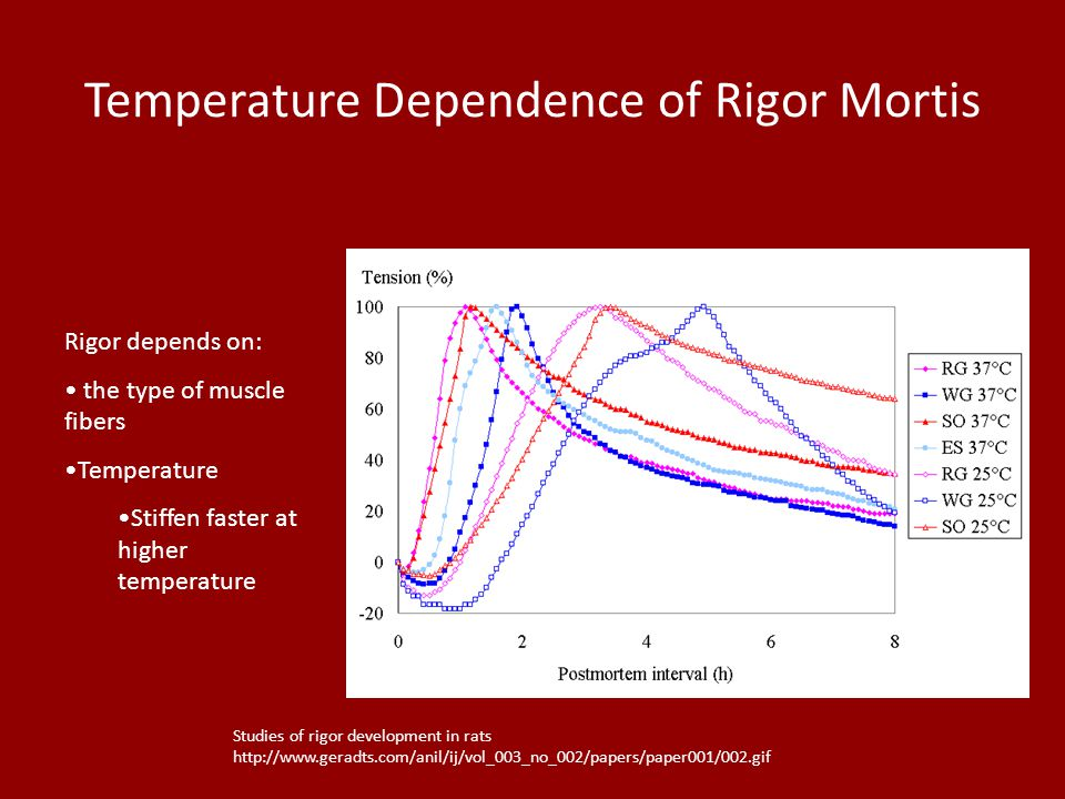 Temperature Dependence of Rigor Mortis Rigor depends on: the type of muscle fibers Temperature Stiffen faster at higher temperature Studies of rigor d
