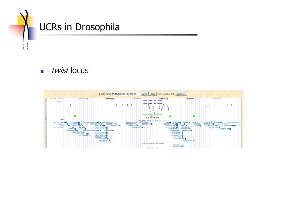 UCRs in Drosophila twist locus