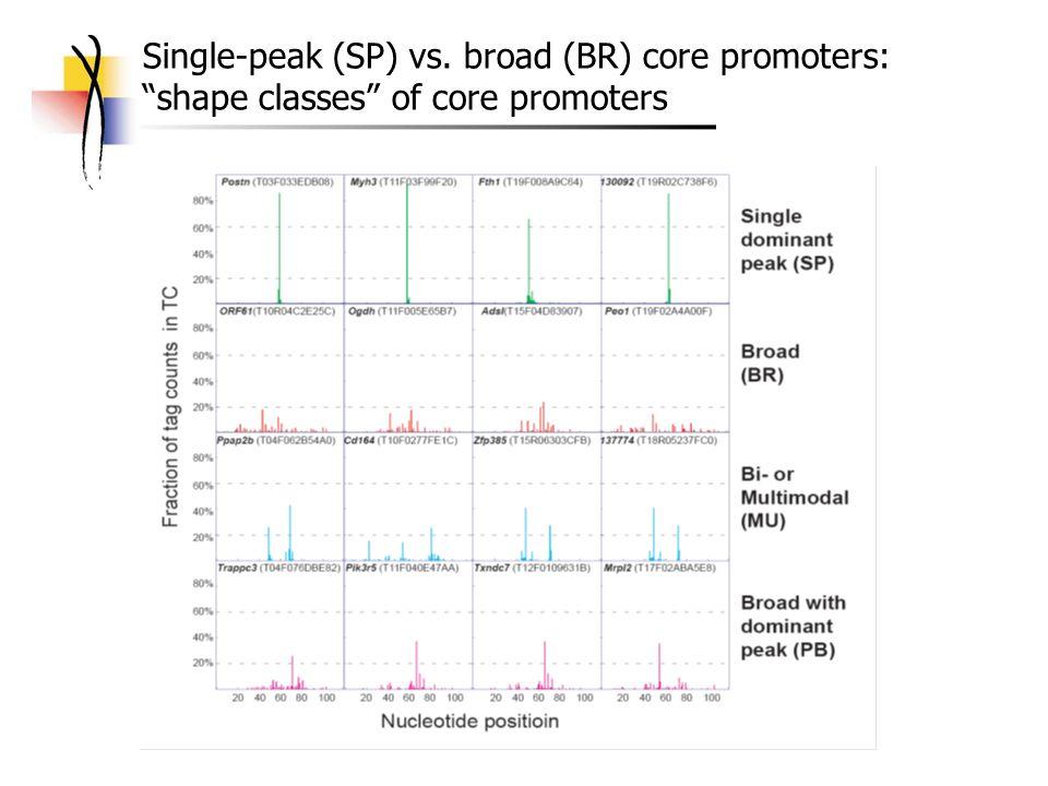 Single-peak (SP) vs. broad (BR) core promoters: shape classes of core promoters