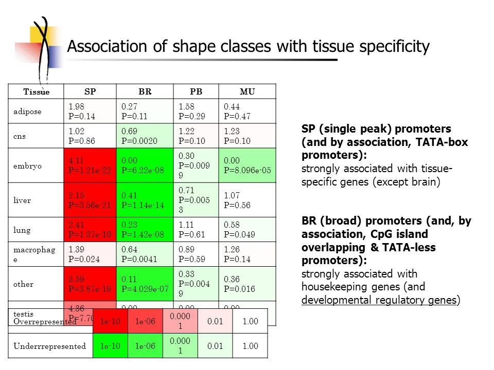 Association of shape classes with tissue specificity TissueSPBRPBMU adipose 1.98 P=0.14 0.27 P=0.11 1.58 P=0.29 0.44 P=0.47 cns 1.02 P=0.86 0.69 P=0.0020 1.22 P=0.10 1.23 P=0.10 embryo 4.11 P=1.21e-22 0.00 P=6.22e-08 0.30 P=0.009 9 0.00 P=8.096e-05 liver 2.15 P=3.56e-21 0.41 P=1.14e-14 0.71 P=0.005 3 1.07 P=0.56 lung 2.41 P=1.37e-10 0.23 P=1.42e-08 1.11 P=0.61 0.58 P=0.049 macrophag e 1.39 P=0.024 0.64 P=0.0041 0.89 P=0.59 1.26 P=0.14 other 3.59 P=3.87e-19 0.11 P=4.029e-07 0.33 P=0.004 9 0.36 P=0.016 testis 4.36 P=7.70e-06 0.00 P=0.058 0.00 P=0.21 Overrepresented1e-101e-06 0.000 1 0.011.00 Underrrepresented1e-101e-06 0.000 1 0.011.00 SP (single peak) promoters (and by association, TATA-box promoters): strongly associated with tissue- specific genes (except brain) BR (broad) promoters (and, by association, CpG island overlapping & TATA-less promoters): strongly associated with housekeeping genes (and developmental regulatory genes)