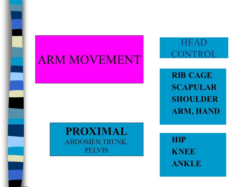 RIB CAGE SCAPULAR SHOULDER ARM, HAND HEAD CONTROL PROXIMAL ABDOMEN,TRUNK, PELVIS HIP KNEE ANKLE