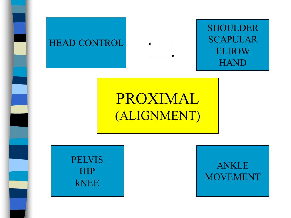 DEVELOPMENT OF HEAD CONTROL Starting from rolling to side to side Rolling means - Neck space (Elongation) - Dissociation from the shoulder & Arms, Trunk, lower part of the body - Dissociation each part of the body