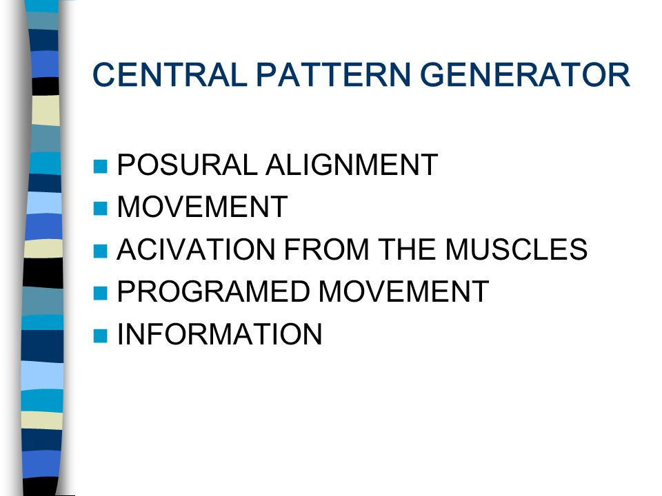 CENTRAL PATTERN GENERATOR POSURAL ALIGNMENT MOVEMENT ACIVATION FROM THE MUSCLES PROGRAMED MOVEMENT INFORMATION