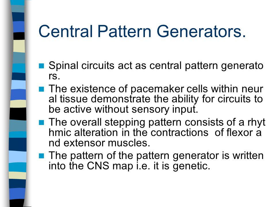 Central Pattern Generators.Spinal circuits act as central pattern generato rs.