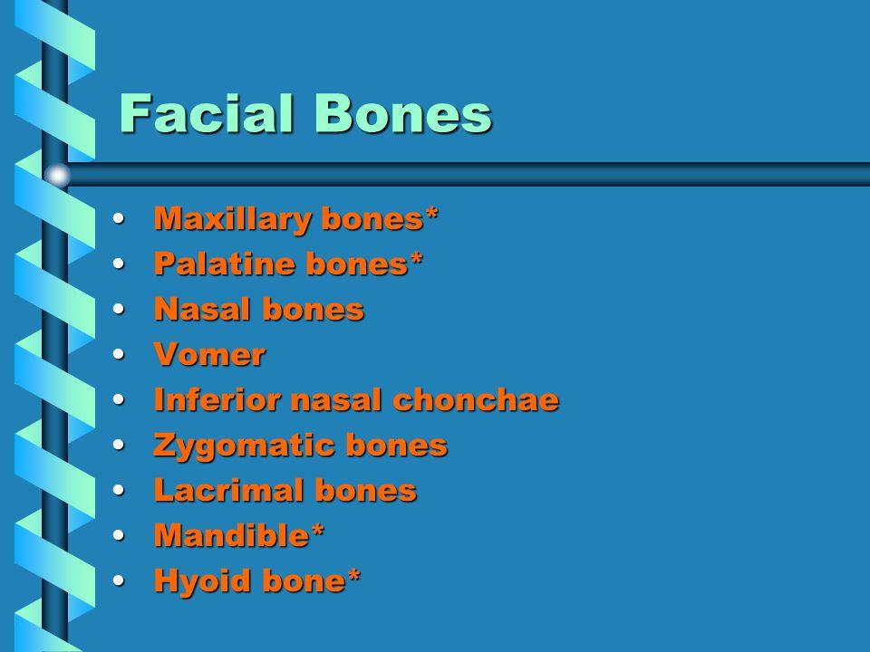 Facial Bones Maxillary bones* Maxillary bones* Palatine bones* Palatine bones* Nasal bones Nasal bones Vomer Vomer Inferior nasal chonchae Inferior nasal chonchae Zygomatic bones Zygomatic bones Lacrimal bones Lacrimal bones Mandible* Mandible* Hyoid bone* Hyoid bone*