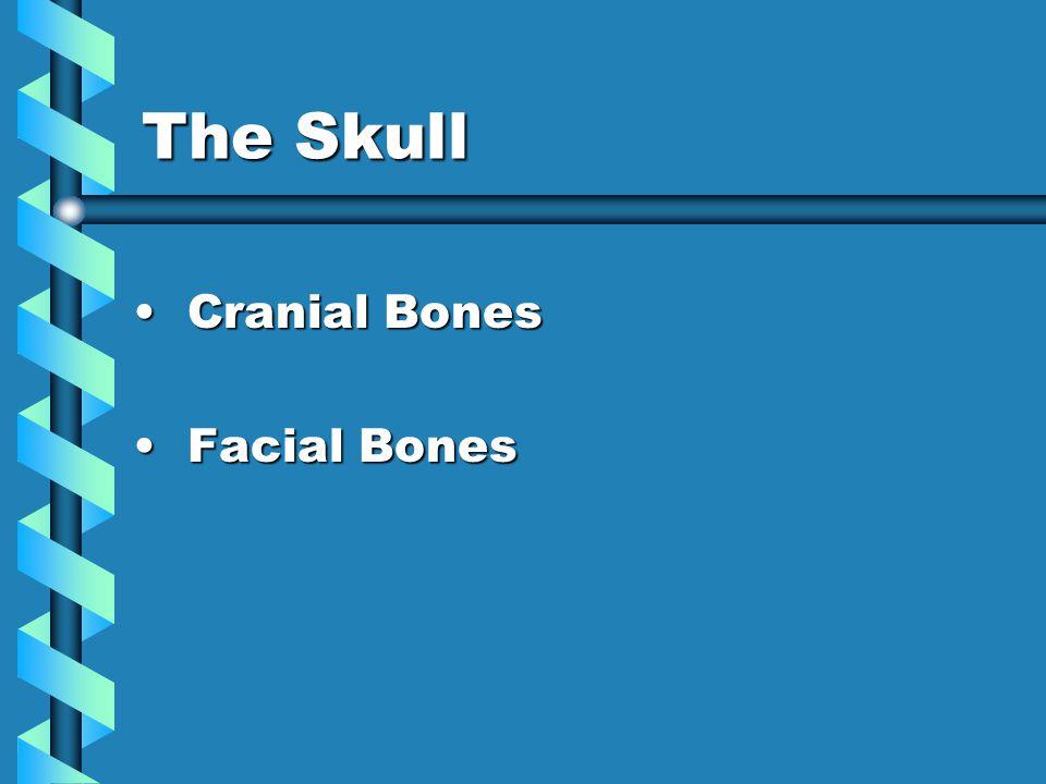 The Skull Cranial Bones Cranial Bones Facial Bones Facial Bones