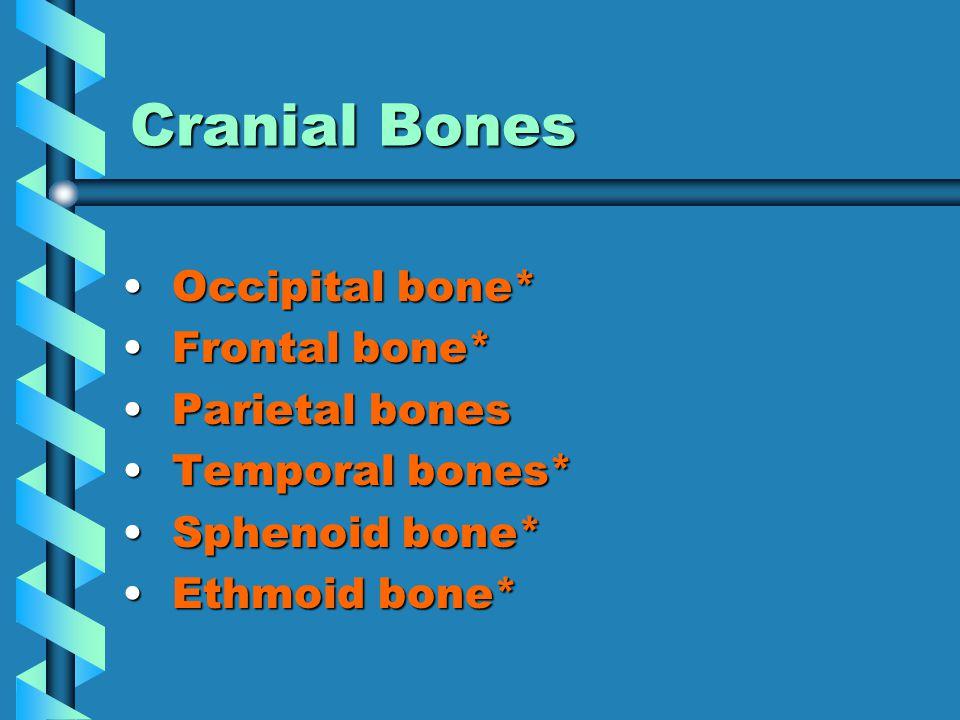 Cranial Bones Occipital bone* Occipital bone* Frontal bone* Frontal bone* Parietal bones Parietal bones Temporal bones* Temporal bones* Sphenoid bone* Sphenoid bone* Ethmoid bone* Ethmoid bone*