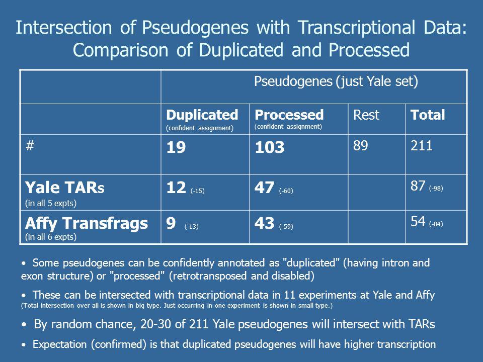 Intersection of Pseudogenes with Transcriptional Data: Manual vs Random Picks, Vega v Yale Yale PseudogenesVega Pseudogenes ENm*ENr*TotalENm*ENr*Total Pseudogenes1367521111266178 Yale-TARS54-6133-3987-9847-5736-4783-103 Affy-TARs28-4826-3654-8427-4335-4362-85 GIS-PET123235 CAGE510155712 EST1051596 By random chance, 20-30 Yale pseudogenes will intersect with TARs.