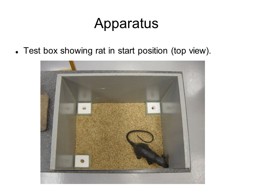 Apparatus Test box showing rat in start position (top view).