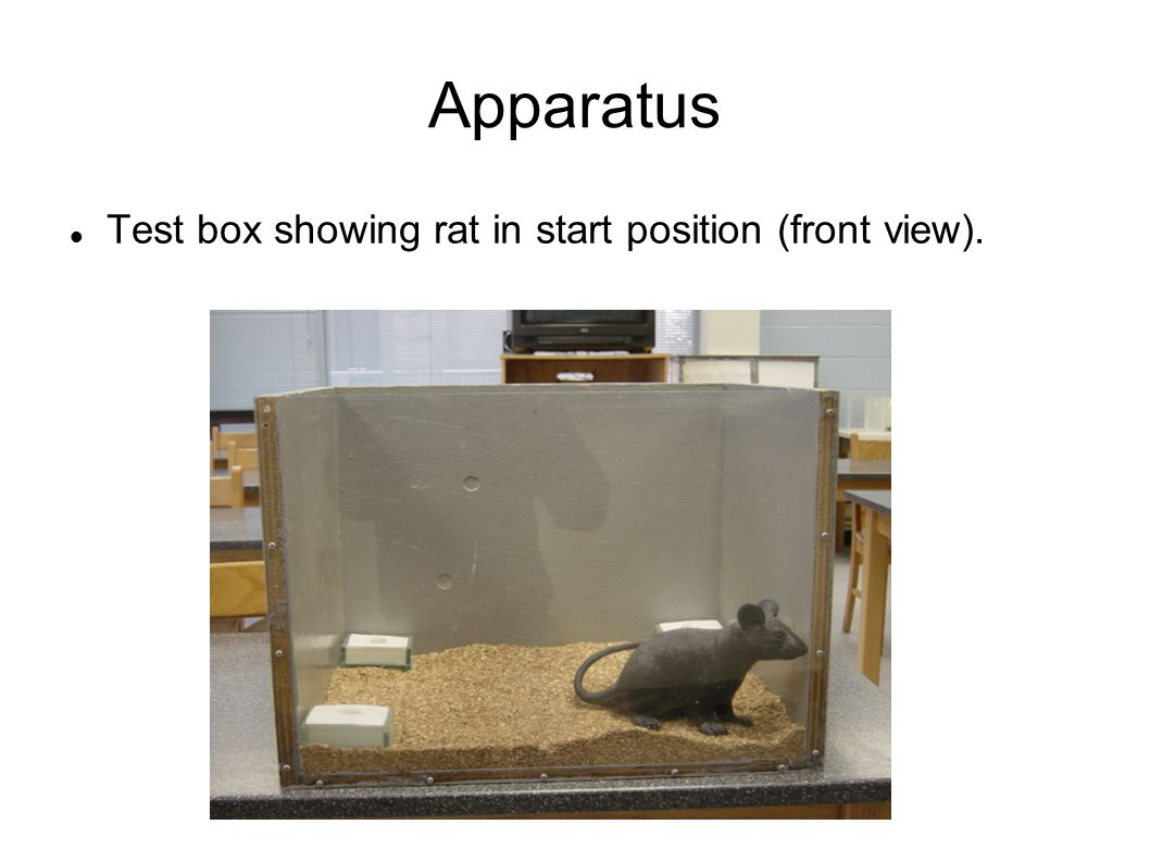 Apparatus Test box showing rat in start position (front view).
