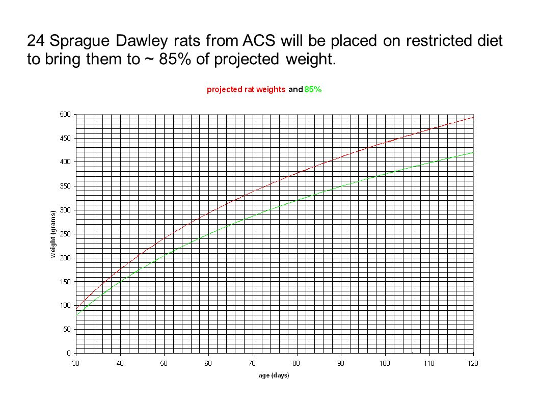 24 Sprague Dawley rats from ACS will be placed on restricted diet to bring them to ~ 85% of projected weight.