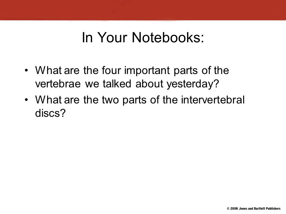 In Your Notebooks: What are the four important parts of the vertebrae we talked about yesterday.