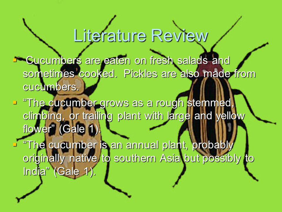 Literature Review Cont'd  Cucumber beetles are beetles that eat cucumbers and many other plants also.