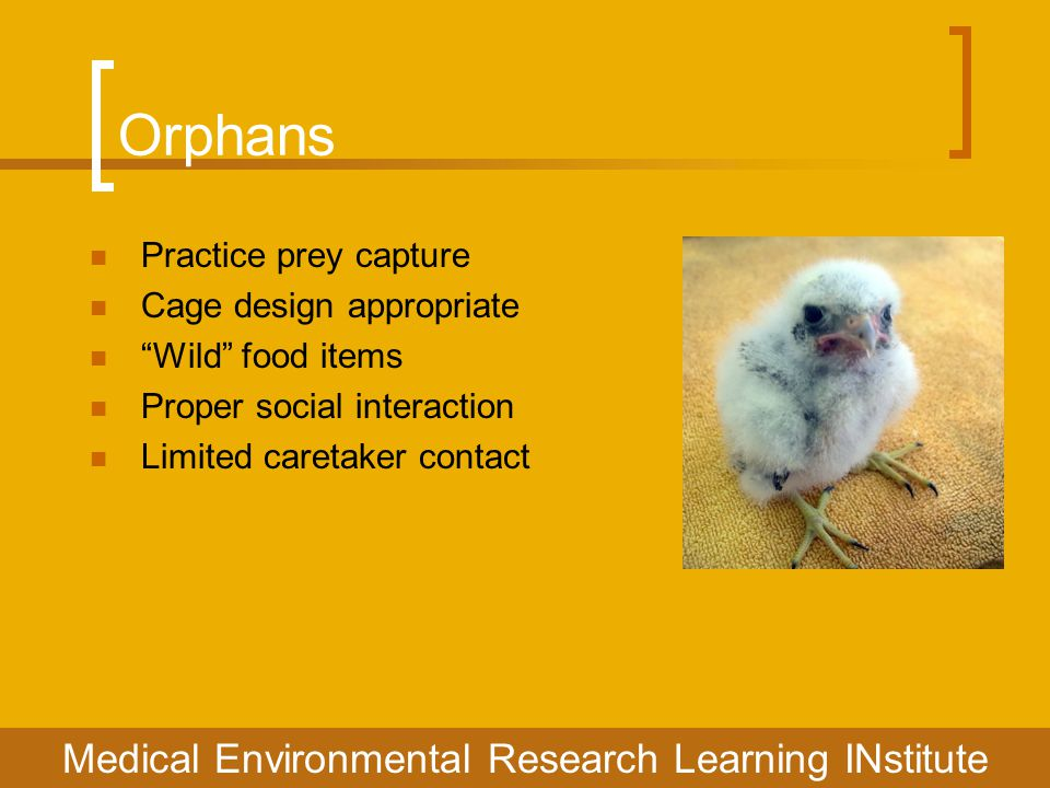 Orphans Medical Environmental Research Learning INstitute Practice prey capture Cage design appropriate Wild food items Proper social interaction Limited caretaker contact