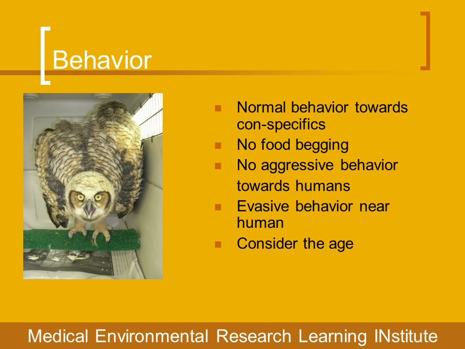 Behavior Medical Environmental Research Learning INstitute Normal behavior towards con-specifics No food begging No aggressive behavior towards humans Evasive behavior near human Consider the age
