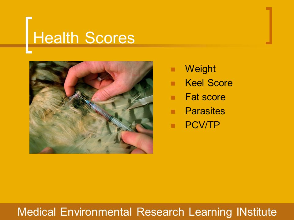 Health Scores Medical Environmental Research Learning INstitute Weight Keel Score Fat score Parasites PCV/TP