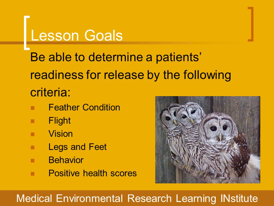 Lesson Goals Be able to determine a patients' readiness for release by the following criteria: Feather Condition Flight Vision Legs and Feet Behavior Positive health scores Medical Environmental Research Learning INstitute
