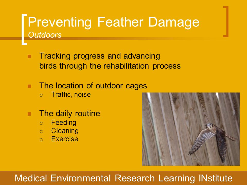 Preventing Feather Damage Outdoors Tracking progress and advancing birds through the rehabilitation process The location of outdoor cages  Traffic, noise The daily routine  Feeding  Cleaning  Exercise Medical Environmental Research Learning INstitute