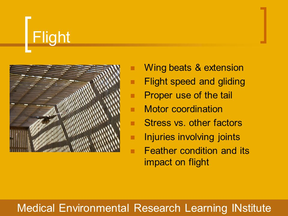 Flight Medical Environmental Research Learning INstitute Wing beats & extension Flight speed and gliding Proper use of the tail Motor coordination Stress vs.
