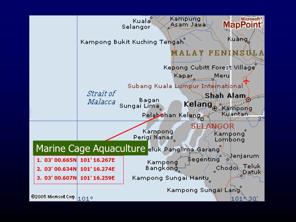 1.03' 00.665N 101' 16.267E 2.03' 00.634N 101' 16.274E 3.03' 00.607N 101' 16.259E Marine Cage Aquaculture
