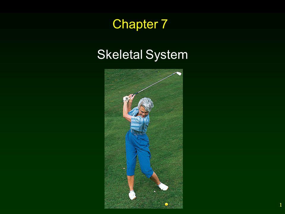 1 Chapter 7 Skeletal System