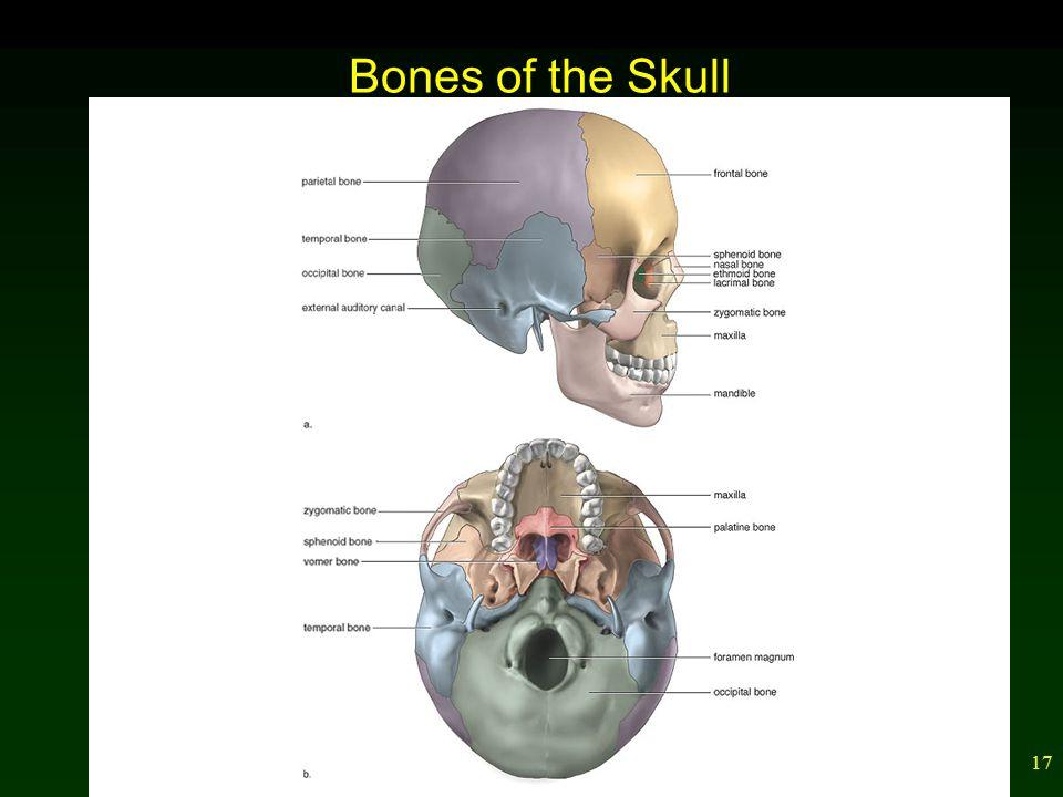 17 Bones of the Skull