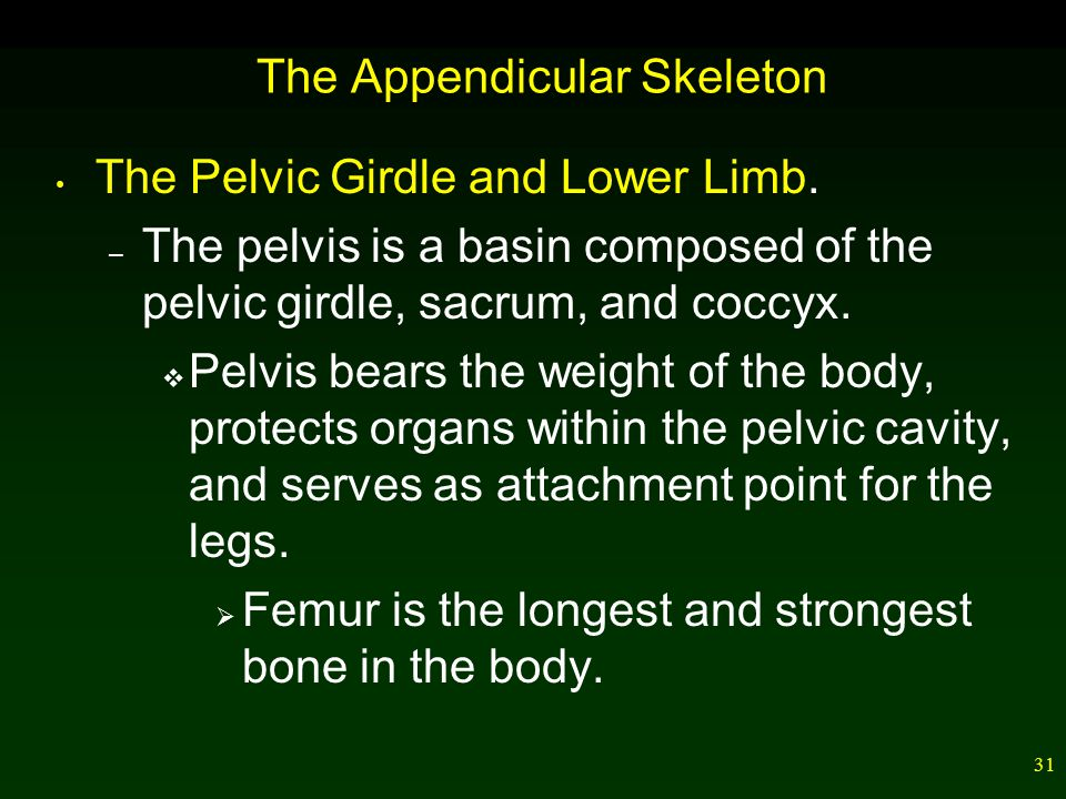31 The Appendicular Skeleton The Pelvic Girdle and Lower Limb.