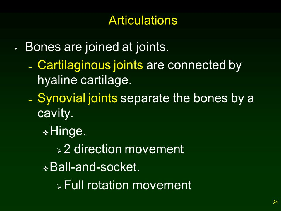 34 Articulations Bones are joined at joints.