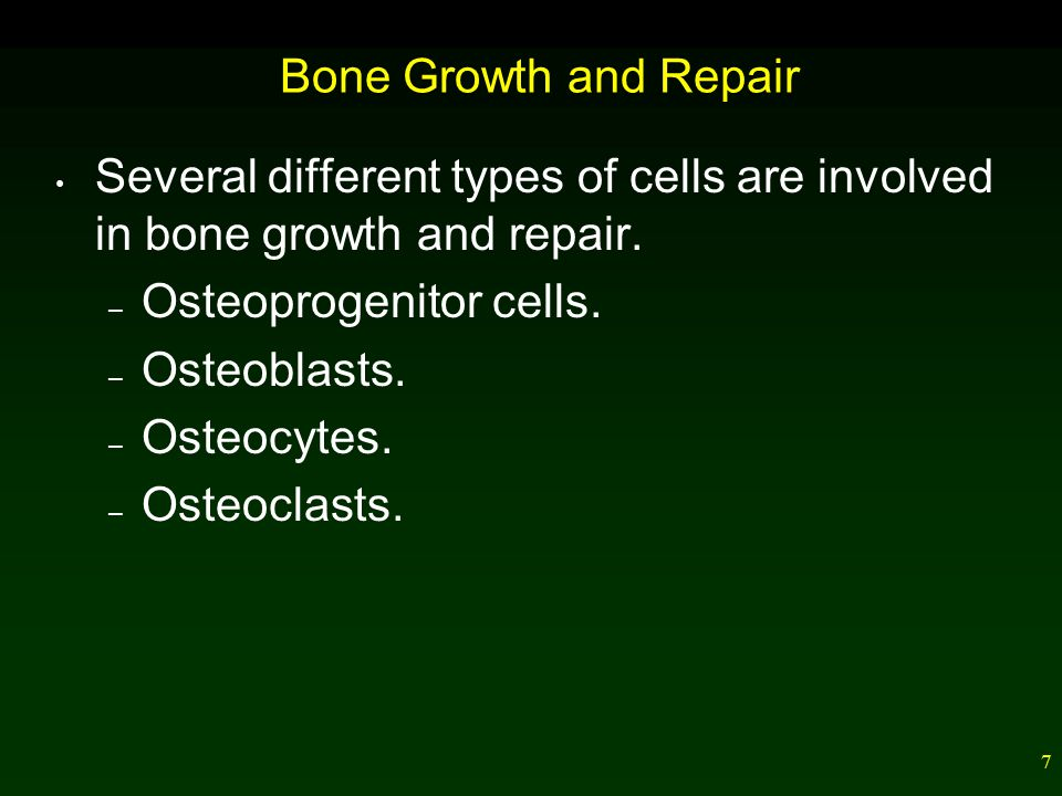 7 Bone Growth and Repair Several different types of cells are involved in bone growth and repair.