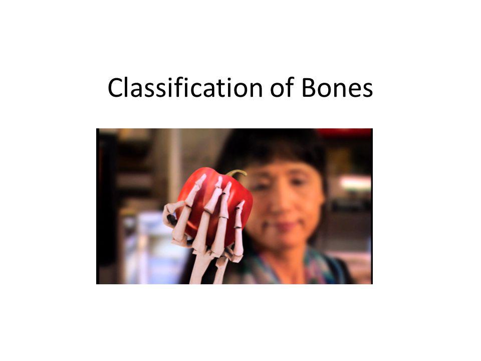 Bones are identified by: 1.Shape A.Long bones B. Short bones C.