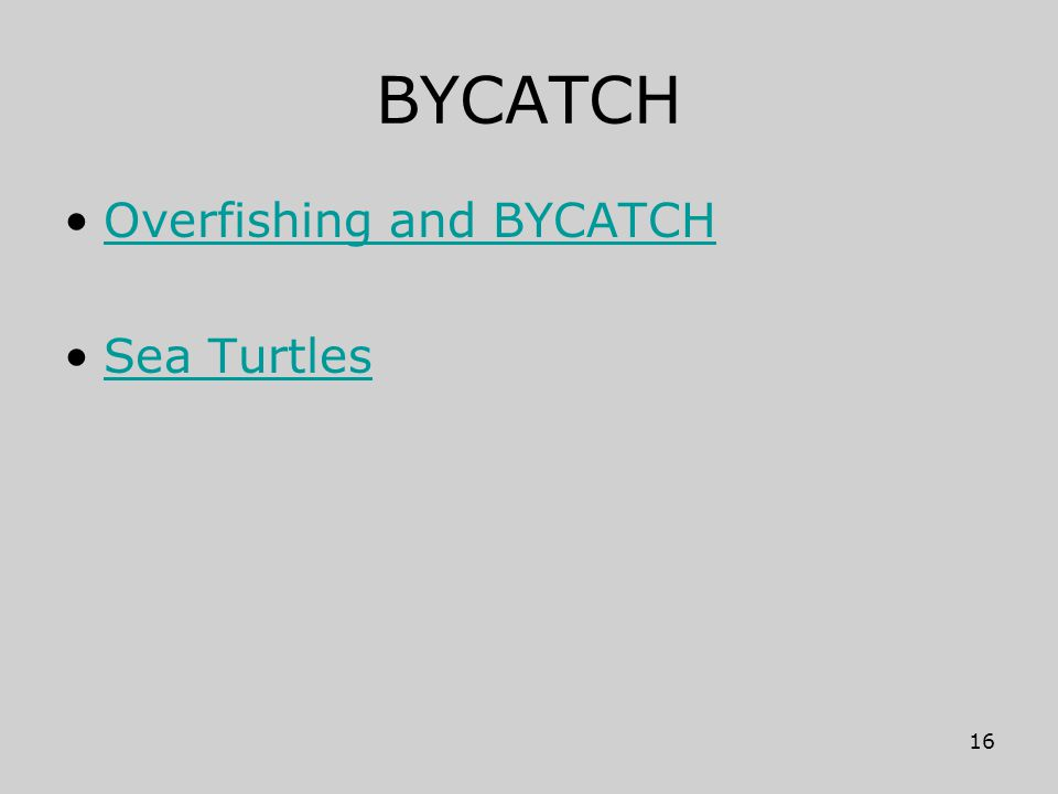 BYCATCH Overfishing and BYCATCH Sea Turtles 16