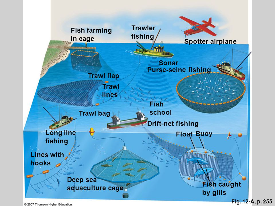 Fig. 12-A, p. 255 Fish farming in cage Trawler fishing Spotter airplane Sonar Trawl flap Trawl lines Purse-seine fishing Trawl bag Fish school Drift-n