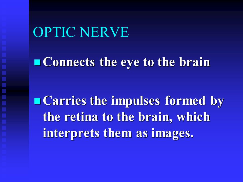 OPTIC NERVE Connects the eye to the brain Connects the eye to the brain Carries the impulses formed by the retina to the brain, which interprets them