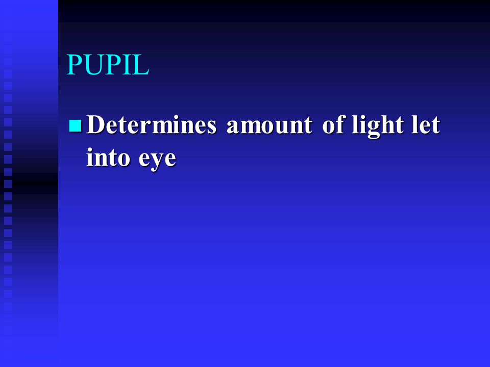 PUPIL Determines amount of light let into eye Determines amount of light let into eye