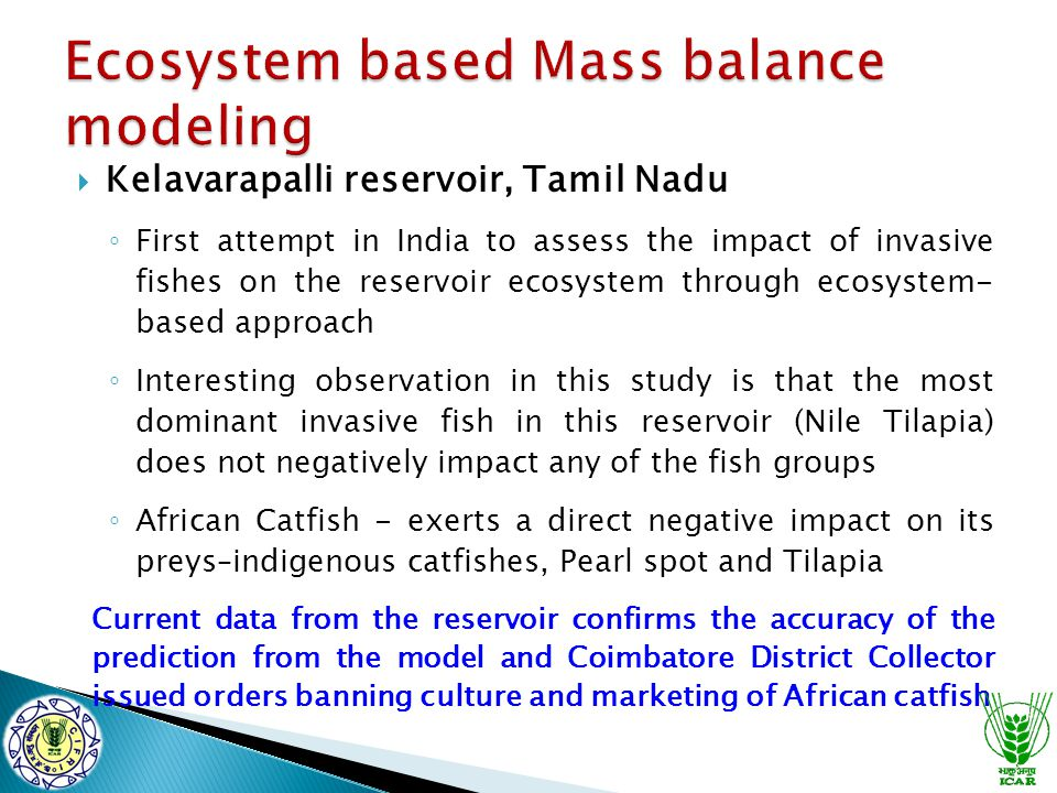  Kelavarapalli reservoir, Tamil Nadu ◦ First attempt in India to assess the impact of invasive fishes on the reservoir ecosystem through ecosystem- based approach ◦ Interesting observation in this study is that the most dominant invasive fish in this reservoir (Nile Tilapia) does not negatively impact any of the fish groups ◦ African Catfish - exerts a direct negative impact on its preys–indigenous catfishes, Pearl spot and Tilapia Current data from the reservoir confirms the accuracy of the prediction from the model and Coimbatore District Collector issued orders banning culture and marketing of African catfish