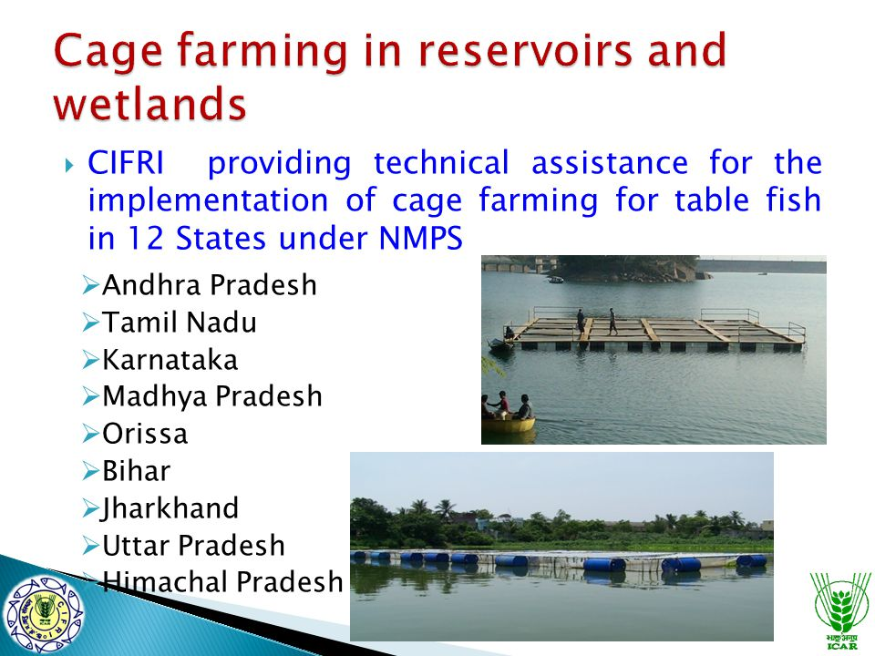  CIFRI providing technical assistance for the implementation of cage farming for table fish in 12 States under NMPS  Andhra Pradesh  Tamil Nadu  K