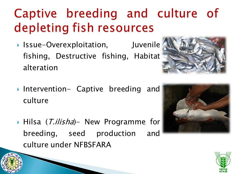  Issue-Overexploitation, Juvenile fishing, Destructive fishing, Habitat alteration  Intervention- Captive breeding and culture  Hilsa (T.ilisha)- New Programme for breeding, seed production and culture under NFBSFARA