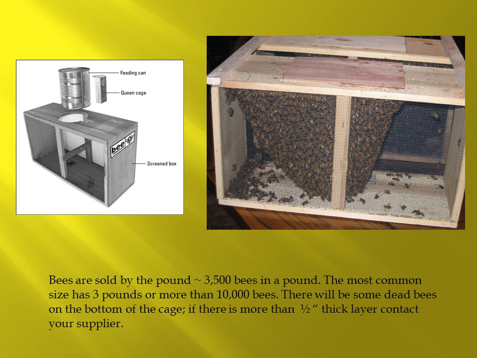 Bees are sold by the pound ~ 3,500 bees in a pound.