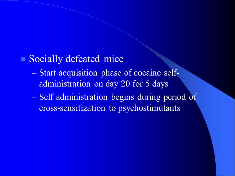 Socially defeated mice – Start acquisition phase of cocaine self- administration on day 20 for 5 days – Self administration begins during period of cross-sensitization to psychostimulants