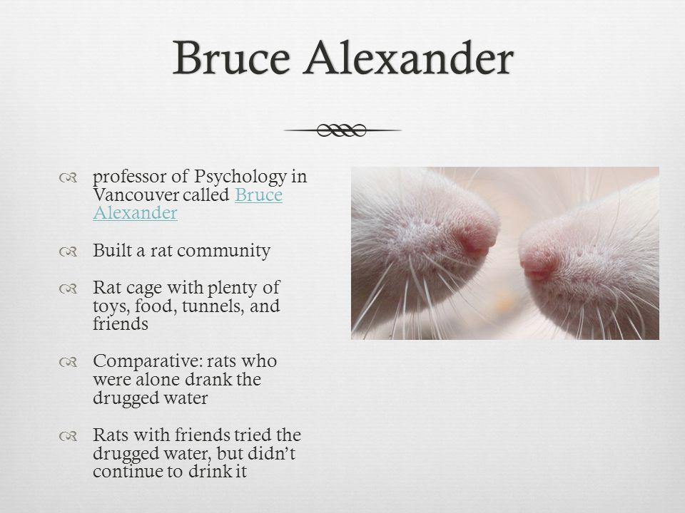 Bruce AlexanderBruce Alexander  professor of Psychology in Vancouver called Bruce AlexanderBruce Alexander  Built a rat community  Rat cage with plenty of toys, food, tunnels, and friends  Comparative: rats who were alone drank the drugged water  Rats with friends tried the drugged water, but didn't continue to drink it