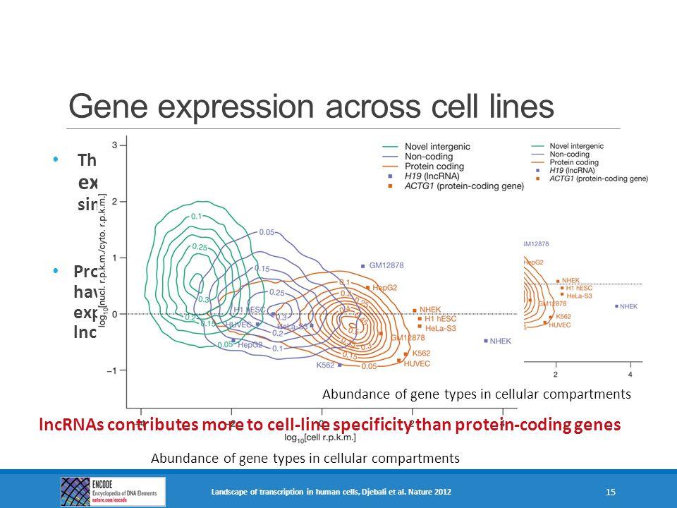 Gene expression across cell lines Landscape of transcription in human cells, Djebali et al. Nature 2012 15 Abundance of gene types in cellular compart