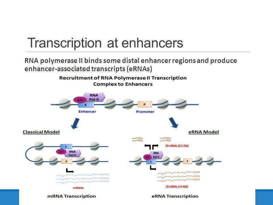 Transcription at enhancers RNA polymerase II binds some distal enhancer regions and produce enhancer-associated transcripts (eRNAs) Landscape of trans