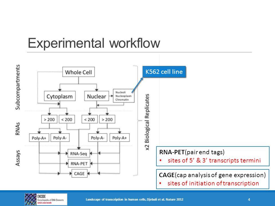 Experimental workflow K562 cell line Landscape of transcription in human cells, Djebali et al. Nature 2012 4 CAGE(cap analysis of gene expression) sit